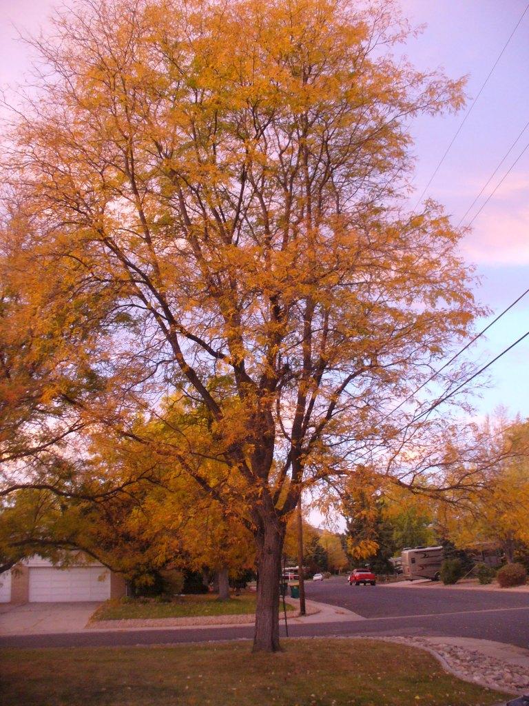 More Leaves Gone